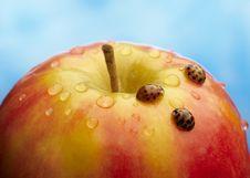 Free Ladybug Royalty Free Stock Photography - 18969667