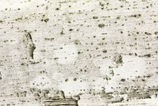 Free White Wood Texture Royalty Free Stock Image - 18969676