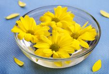 Yellow Daisies In Glass Bowl Royalty Free Stock Photo