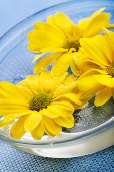 Yellow Daisies In Glass Bowl Stock Photography
