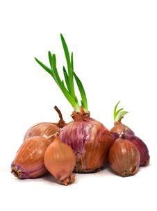 Free Onions Stock Photo - 18971400