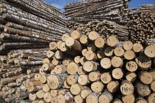 Free The Storage Of Logs Royalty Free Stock Images - 18976019