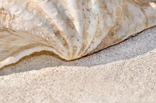 Free Seashell  On Sand Stock Photos - 18976393