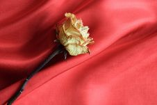 Free Rose On Red Stock Photography - 18976892