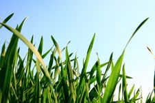 Free Grass And Dew Royalty Free Stock Photo - 18977445