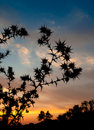 Free Silhouette Barbed Grass Royalty Free Stock Photos - 18983958