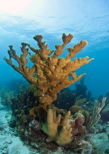 Free Coral Reef Stock Image - 18980741