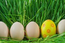 Free Egg Stock Photos - 18981473