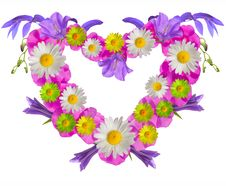 Free Pink Floral Frame Royalty Free Stock Image - 18985836