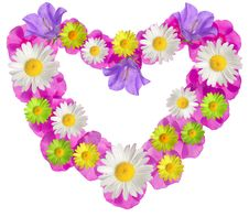 Free Pink Floral Frame Stock Photography - 18985842