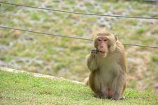 Free Monkey Stock Photos - 18989423