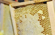 Honeycomb In The Wooden Frame Stock Photos