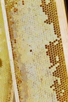Honeycomb In The Wooden Frame Stock Images