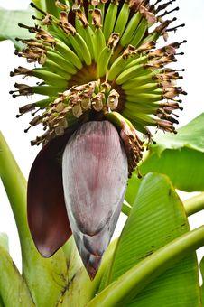 Free Banana Stock Photo - 18990930
