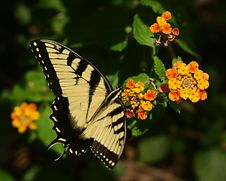 Free Butterfly 1 Stock Photos - 190583