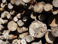 Free Woodpile Royalty Free Stock Photography - 192127