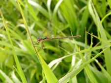 Free Dragonfly. Stock Photos - 192443