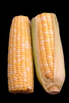 Free Two Ears Of Corn Over Black Stock Photo - 192860