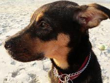 Free Lost, Sad Puppy Stock Photos - 194663