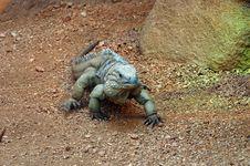 Free Lizard 2 Stock Image - 194721