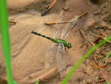 Free Dragonfly Stock Image - 194821