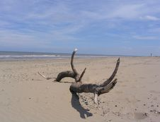 Free Driftwood On Beach Stock Photos - 194843