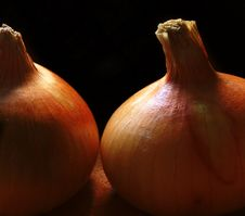 Free Onion Study 1 Stock Photography - 196732