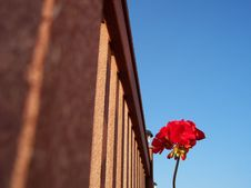 Free Lone Flower Stock Images - 197624