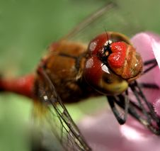 Free Dragon Fly ...(5) Stock Image - 198271