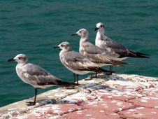Free Seagulls Royalty Free Stock Photo - 198495