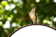 Free Bird On A Mirror Stock Photography - 198522