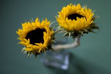 Free Sunflowers In Vase Royalty Free Stock Images - 198699
