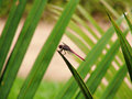 Free Red Dragonfly 2 Stock Photography - 1904452