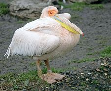 Pelican 2 Stock Images