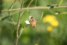 Free Bee Stock Image - 1901911