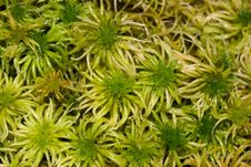 Free Green Moss Close Up Royalty Free Stock Image - 1902656