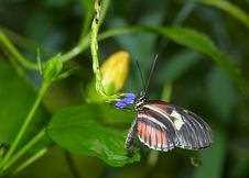 Free Beautiful Butterfly Royalty Free Stock Photo - 1904445