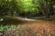 Free Windy Autumn Path Royalty Free Stock Image - 1904456