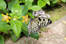 Free Beautiful Butterfly Royalty Free Stock Photo - 1905385