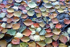 Free Leafs Floating Royalty Free Stock Photos - 1905868