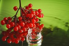 Free Guelder-rose 4 Royalty Free Stock Photography - 1907277