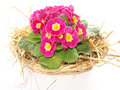 Free Spring Background Stock Images - 19006904