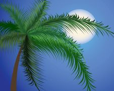 Free Branches Of A Palm Tree Against The Moon Royalty Free Stock Images - 19005249