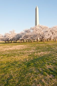 Free The Washington Monument Royalty Free Stock Images - 19005479