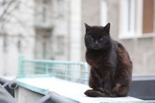 Free Black Cat Stock Image - 19006141