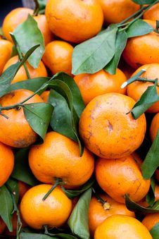 Free Tangerines Royalty Free Stock Photography - 19006587