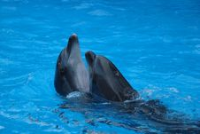 Free Two Dolphin Stock Photography - 19007372