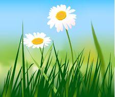 Free Flower Stock Photo - 19010420