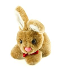Free Bunny Rabbit Royalty Free Stock Images - 19010679