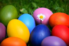 Colorful Easter Eggs With Daisy Royalty Free Stock Image